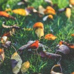 Emerytura – od czego zacząć?